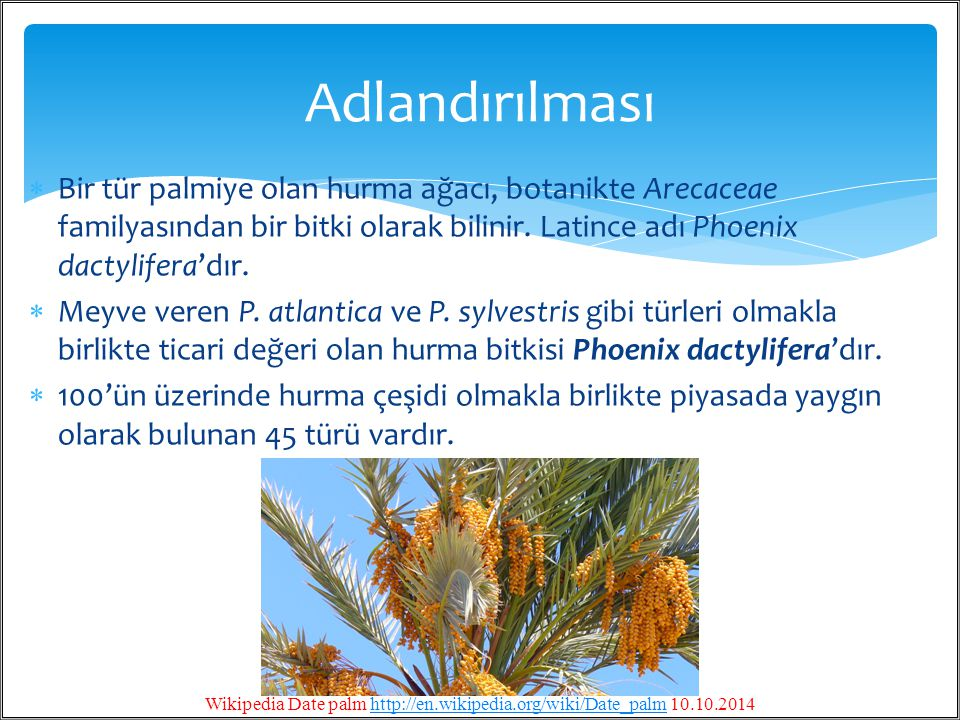 Wikipedia Date palm http://en.wikipedia.org/wiki/Date_palm 10.10.2014