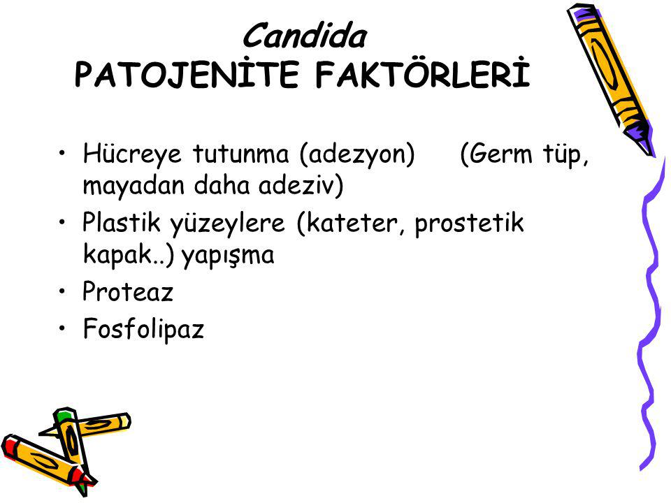 Candida PATOJENİTE FAKTÖRLERİ