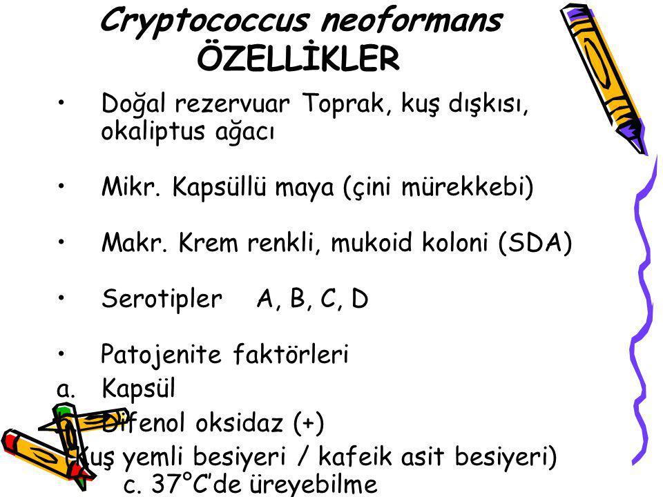 Cryptococcus neoformans ÖZELLİKLER