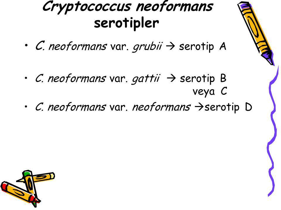 Cryptococcus neoformans serotipler