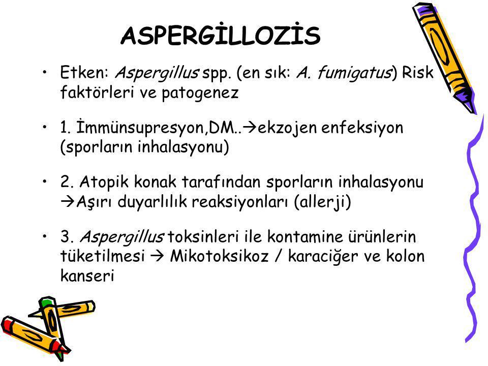 ASPERGİLLOZİS Etken: Aspergillus spp. (en sık: A. fumigatus) Risk faktörleri ve patogenez.