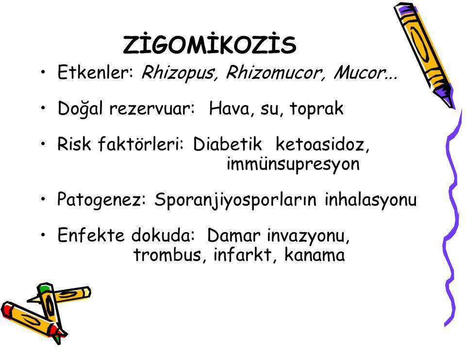ZİGOMİKOZİS Etkenler: Rhizopus, Rhizomucor, Mucor...