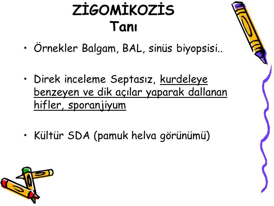 ZİGOMİKOZİS Tanı Örnekler Balgam, BAL, sinüs biyopsisi..