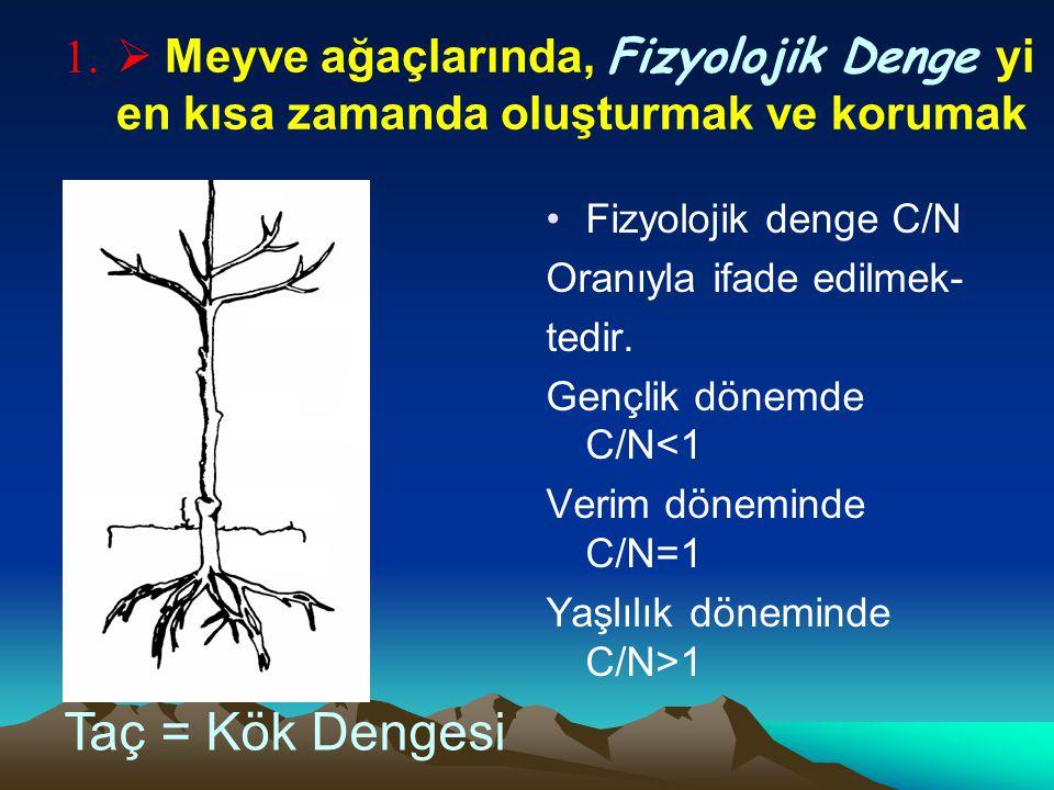  Meyve ağaçlarında, Fizyolojik Denge yi en kısa zamanda oluşturmak ve korumak