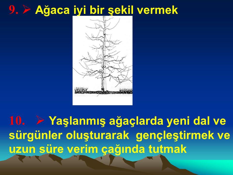9.  Ağaca iyi bir şekil vermek