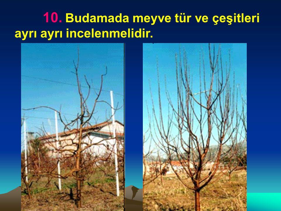 10. Budamada meyve tür ve çeşitleri ayrı ayrı incelenmelidir.