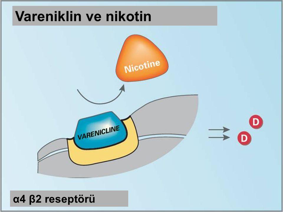Vareniklin ve nikotin α4 β2 reseptörü