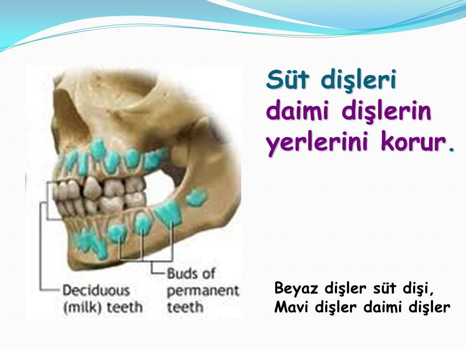 Süt dişleri daimi dişlerin yerlerini korur.