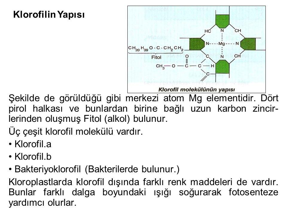 Klorofilin Yapısı