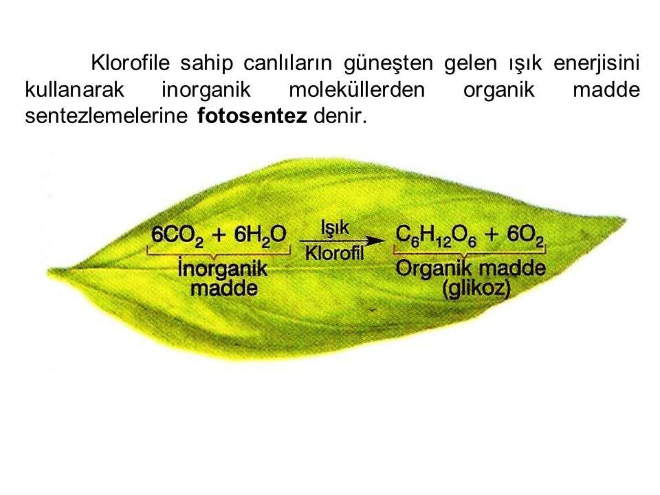 Klorofile sahip canlıların güneşten gelen ışık enerjisini kullanarak inorganik moleküllerden organik madde sentezlemelerine fotosentez denir.