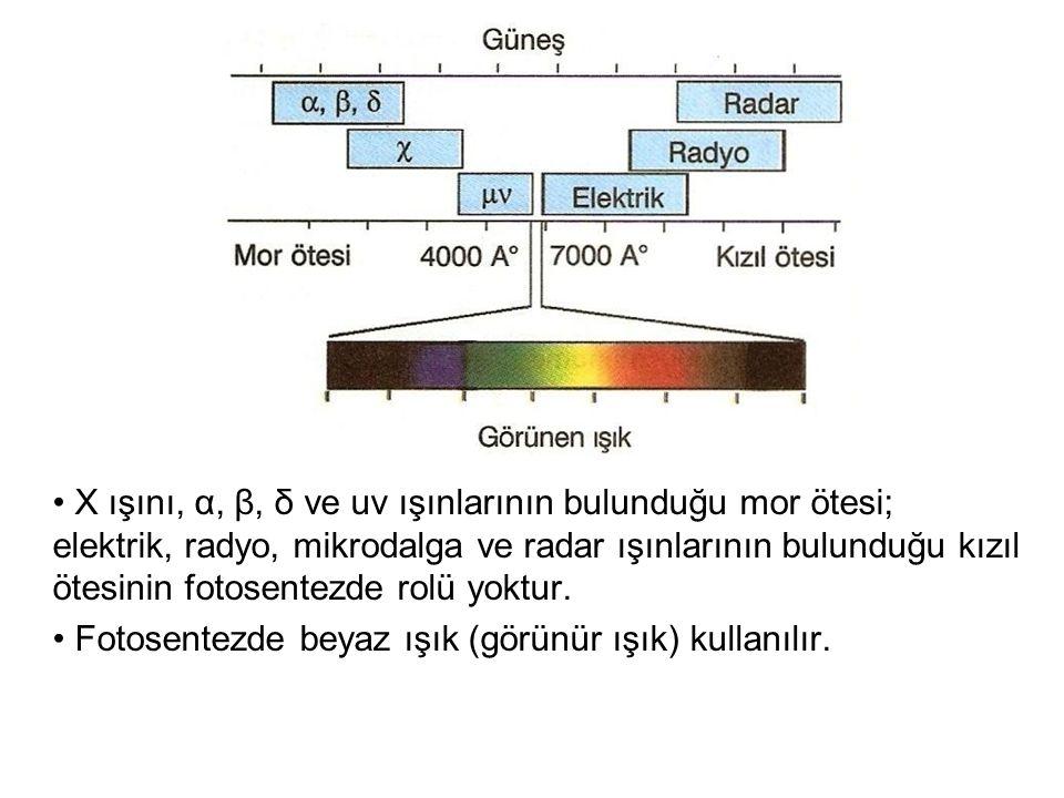 X ışını, α, β, δ ve uv ışınlarının bulunduğu mor ötesi; elektrik, radyo, mikrodalga ve radar ışınlarının bulunduğu kızıl ötesinin fotosentezde rolü yoktur.