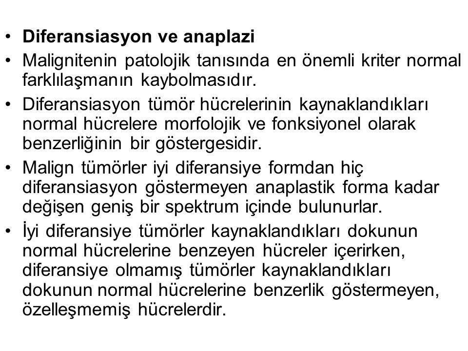 Diferansiasyon ve anaplazi