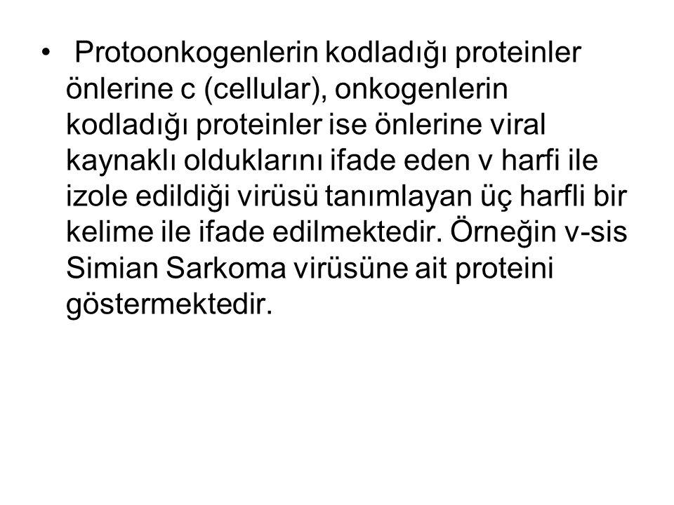 Protoonkogenlerin kodladığı proteinler önlerine c (cellular), onkogenlerin kodladığı proteinler ise önlerine viral kaynaklı olduklarını ifade eden v harfi ile izole edildiği virüsü tanımlayan üç harfli bir kelime ile ifade edilmektedir.