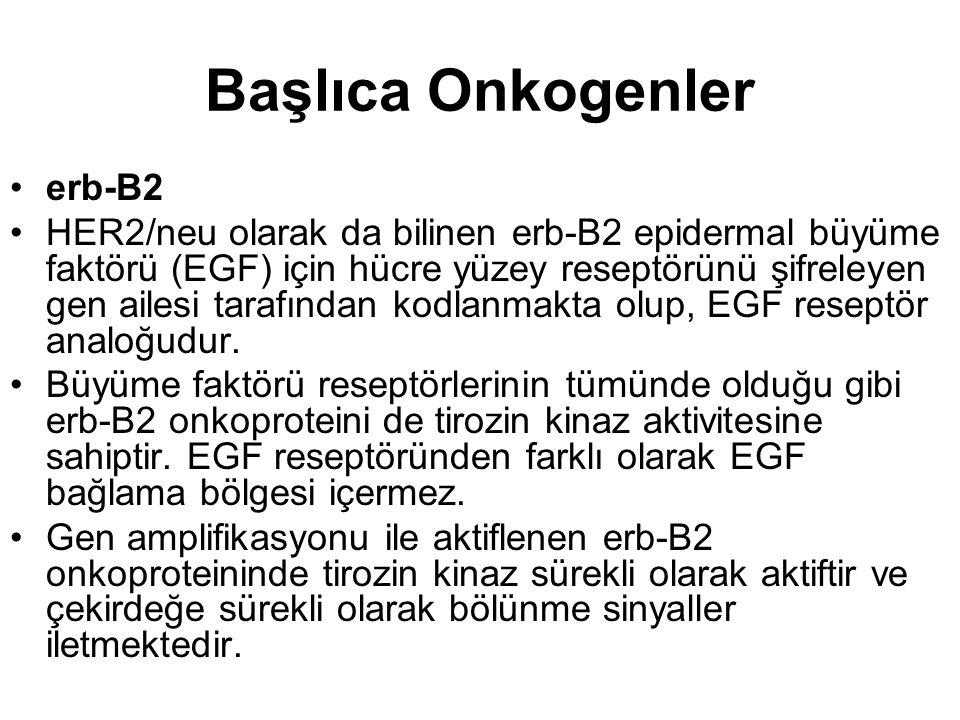 Başlıca Onkogenler erb-B2