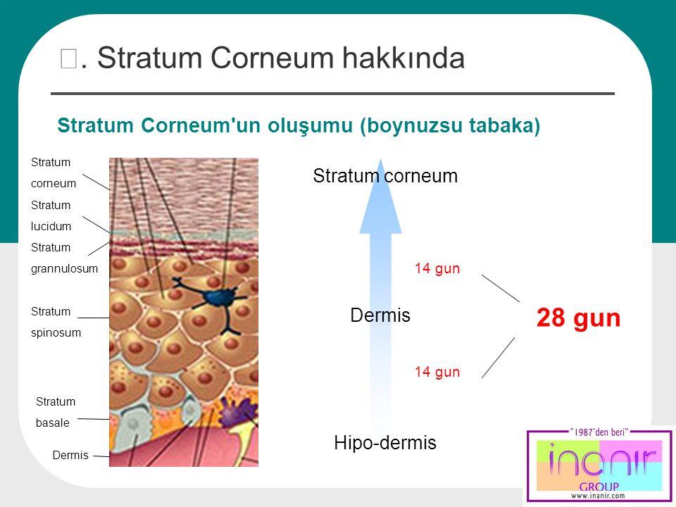 Ⅰ. Stratum Corneum hakkında