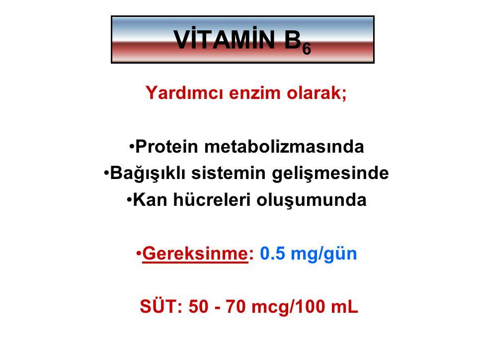 VİTAMİN B6 Yardımcı enzim olarak; Protein metabolizmasında