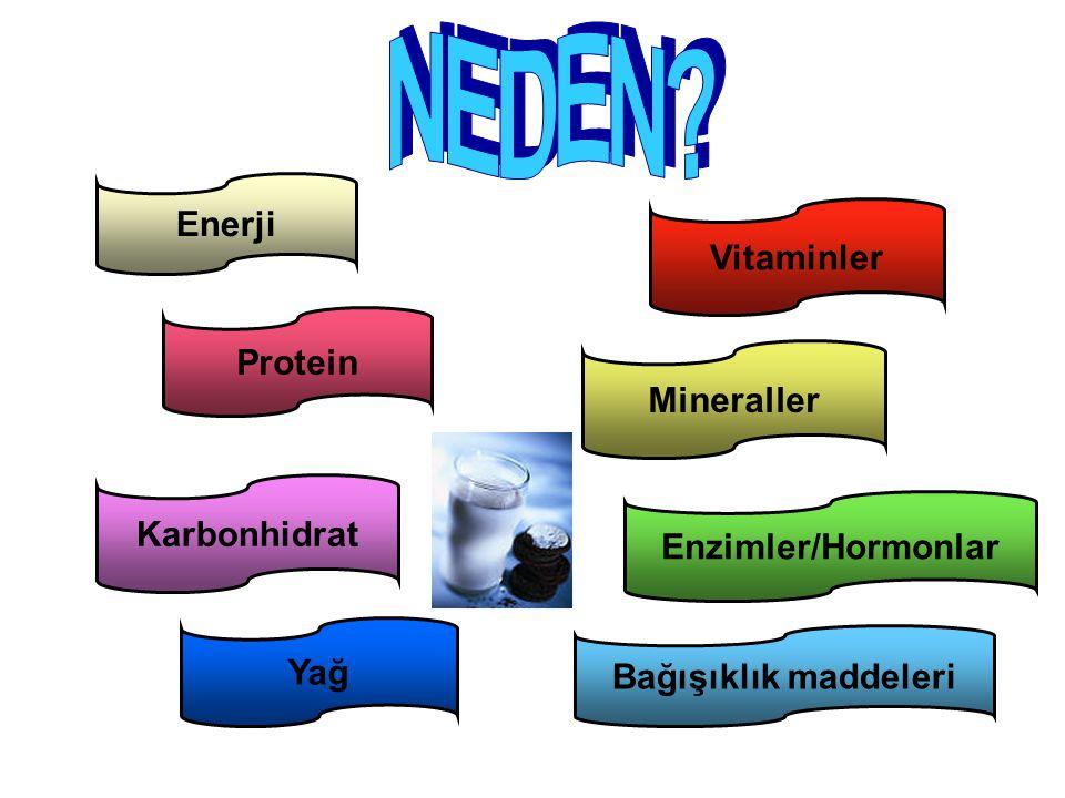 NEDEN Enerji Vitaminler Protein Mineraller Karbonhidrat