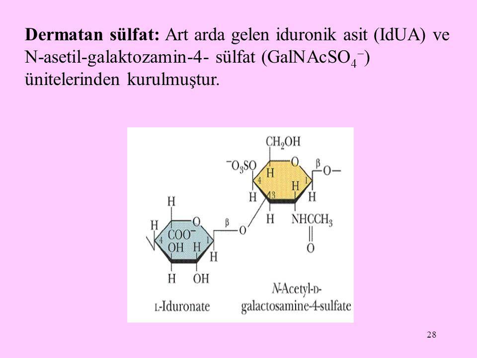 Dermatan sülfat: Art arda gelen iduronik asit (IdUA) ve N-asetil-galaktozamin-4- sülfat (GalNAcSO4) ünitelerinden kurulmuştur.