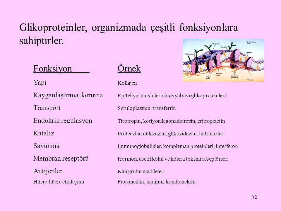 Glikoproteinler, organizmada çeşitli fonksiyonlara sahiptirler.