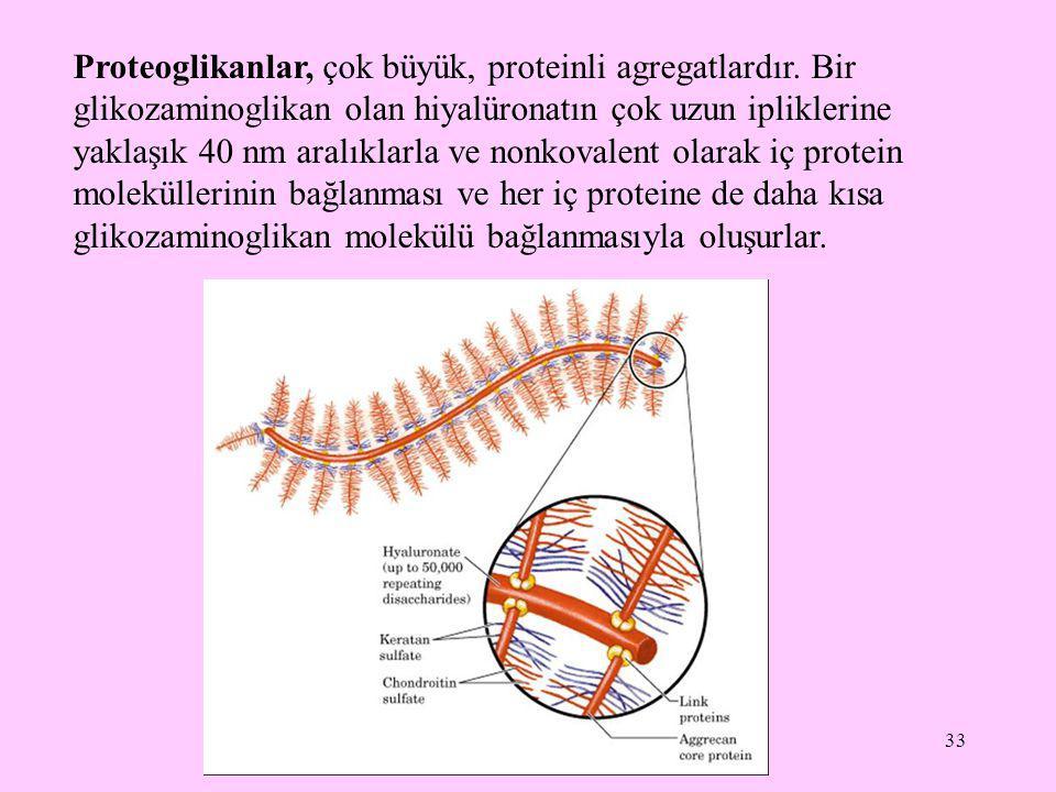 Proteoglikanlar, çok büyük, proteinli agregatlardır