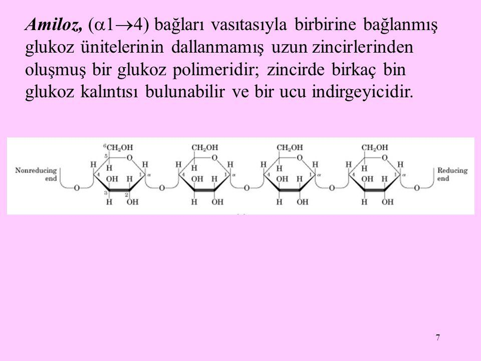 Amiloz, (14) bağları vasıtasıyla birbirine bağlanmış glukoz ünitelerinin dallanmamış uzun zincirlerinden oluşmuş bir glukoz polimeridir; zincirde birkaç bin glukoz kalıntısı bulunabilir ve bir ucu indirgeyicidir.