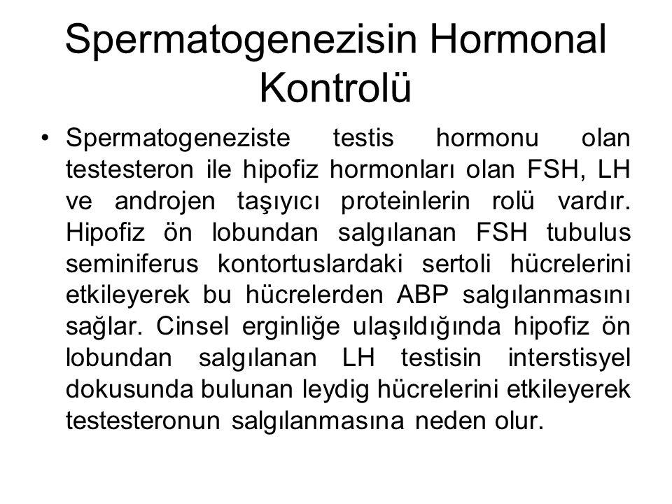 Spermatogenezisin Hormonal Kontrolü