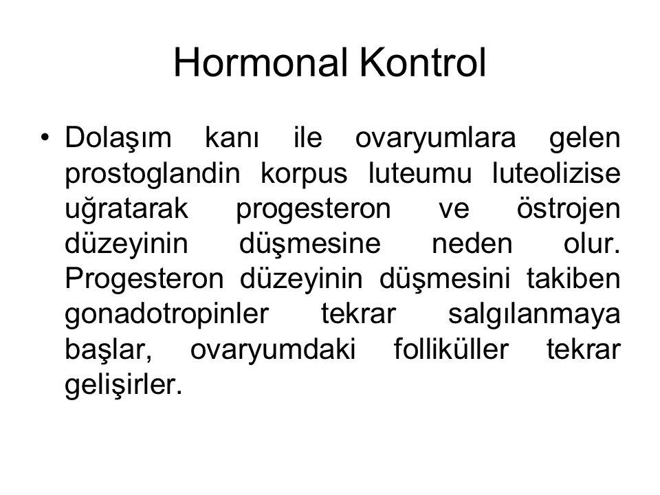 Hormonal Kontrol