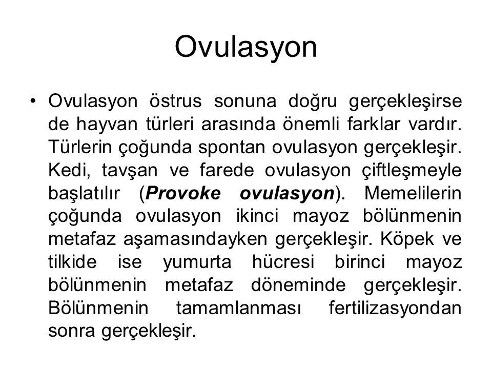Ovulasyon