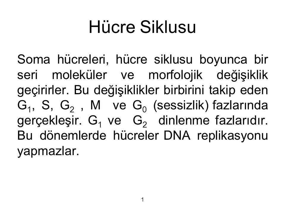 Hücre Siklusu