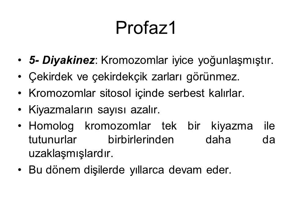 Profaz1 5- Diyakinez: Kromozomlar iyice yoğunlaşmıştır.