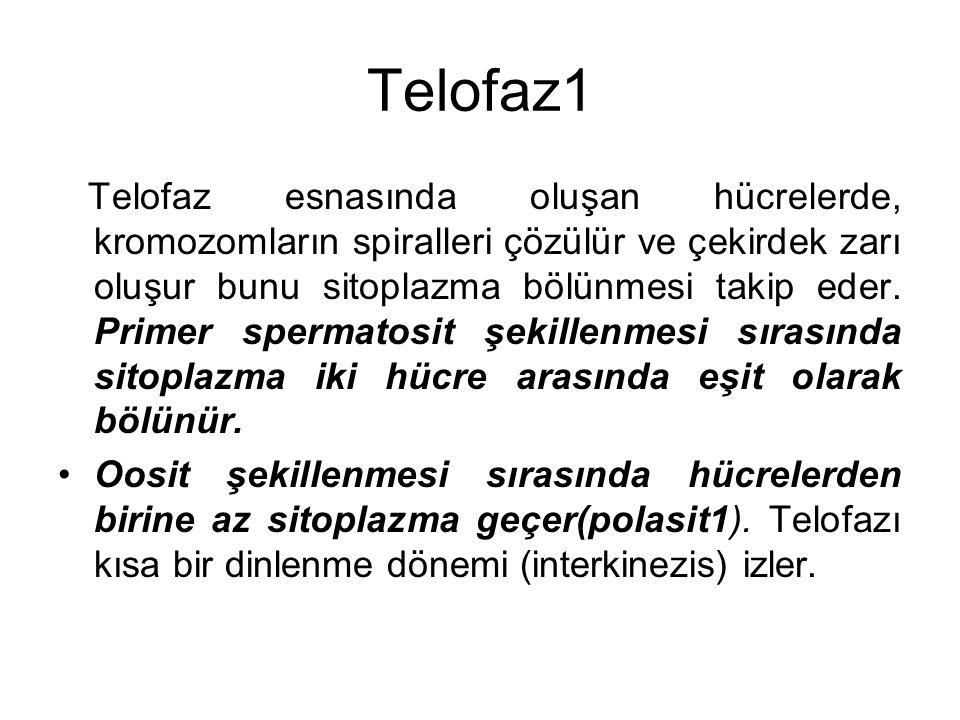 Telofaz1