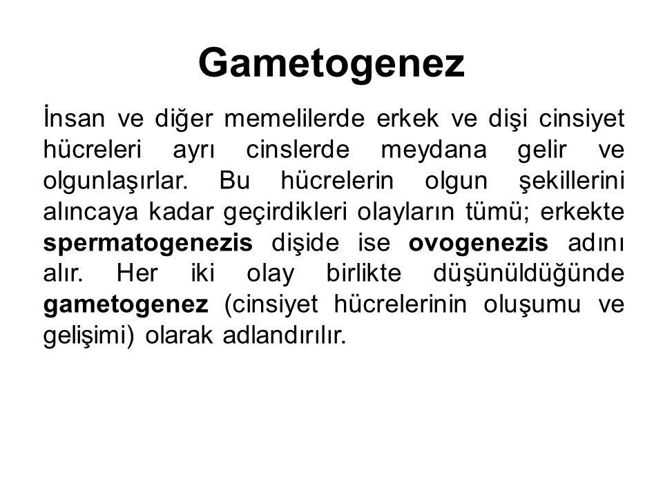 Gametogenez