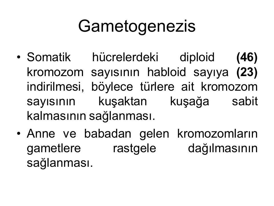 Gametogenezis