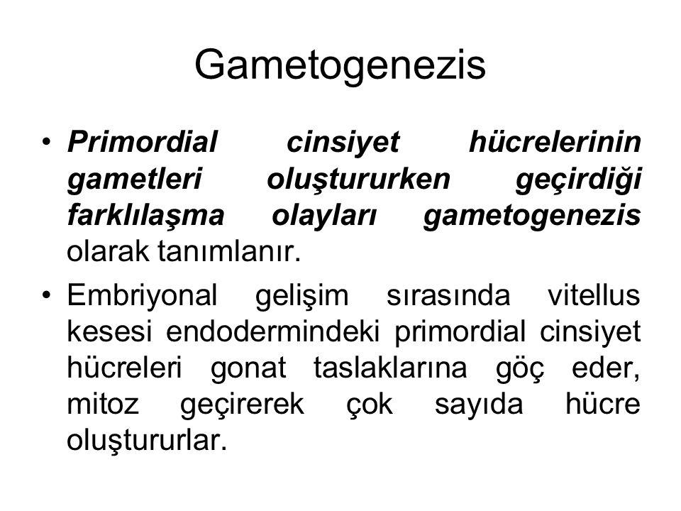 Gametogenezis Primordial cinsiyet hücrelerinin gametleri oluştururken geçirdiği farklılaşma olayları gametogenezis olarak tanımlanır.