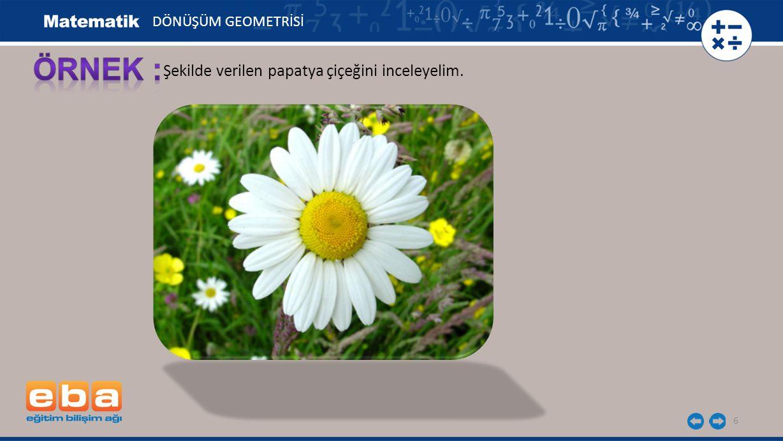 ÖRNEK : Şekilde verilen papatya çiçeğini inceleyelim.