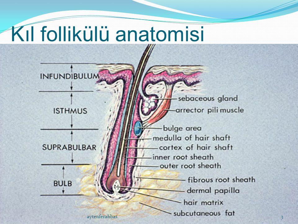Kıl follikülü anatomisi