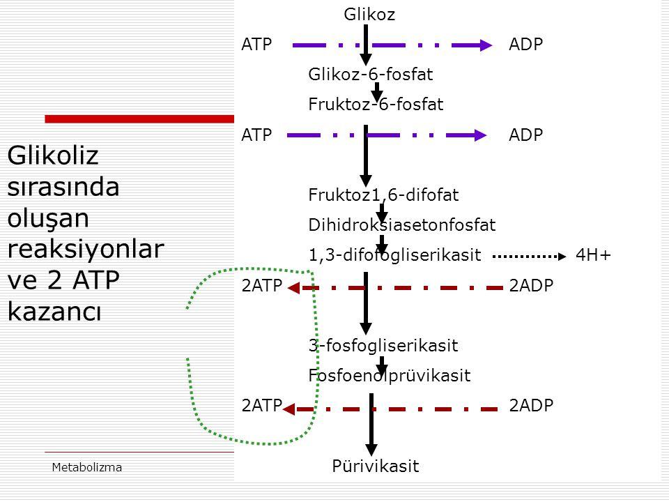Glikoliz sırasında oluşan reaksiyonlar ve 2 ATP kazancı