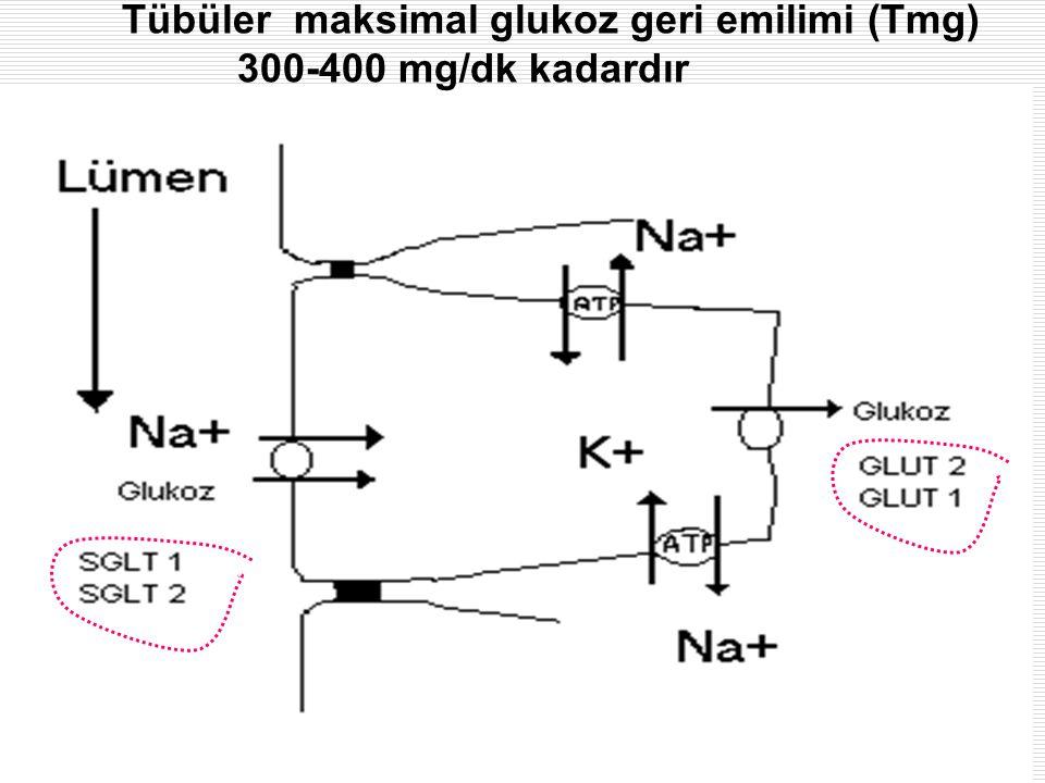 Tübüler maksimal glukoz geri emilimi (Tmg) 300-400 mg/dk kadardır