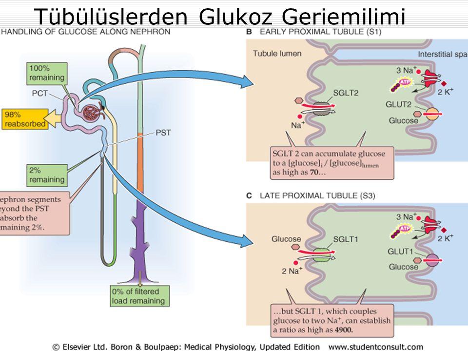 Tübülüslerden Glukoz Geriemilimi