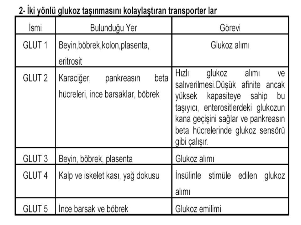 Metabolizma Prof Dr Ahmet ERGÜN