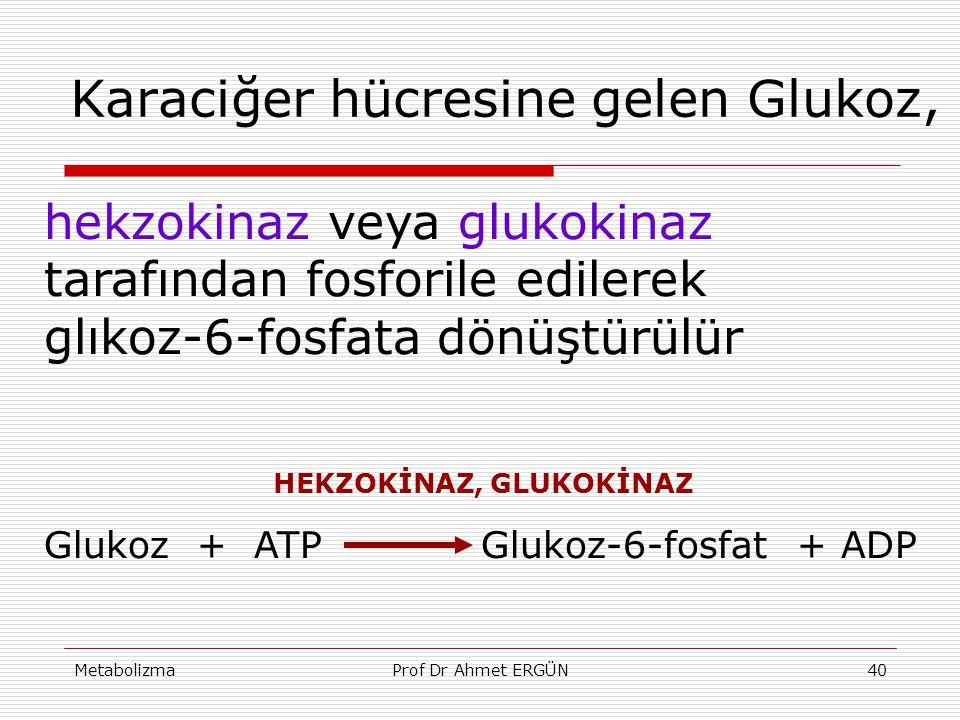 Karaciğer hücresine gelen Glukoz,