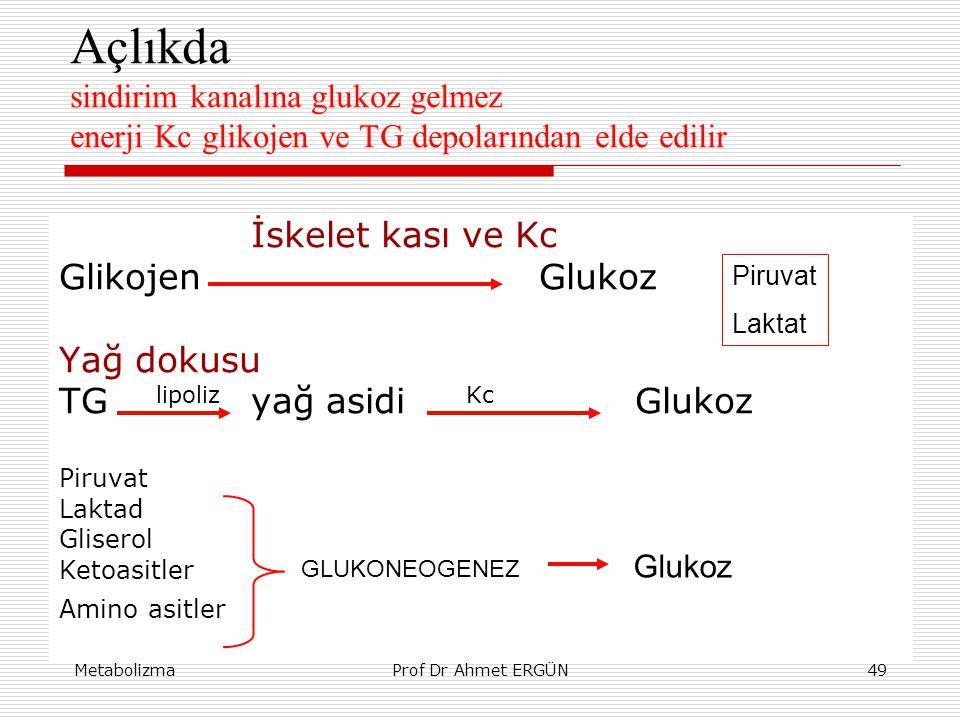 Açlıkda sindirim kanalına glukoz gelmez enerji Kc glikojen ve TG depolarından elde edilir
