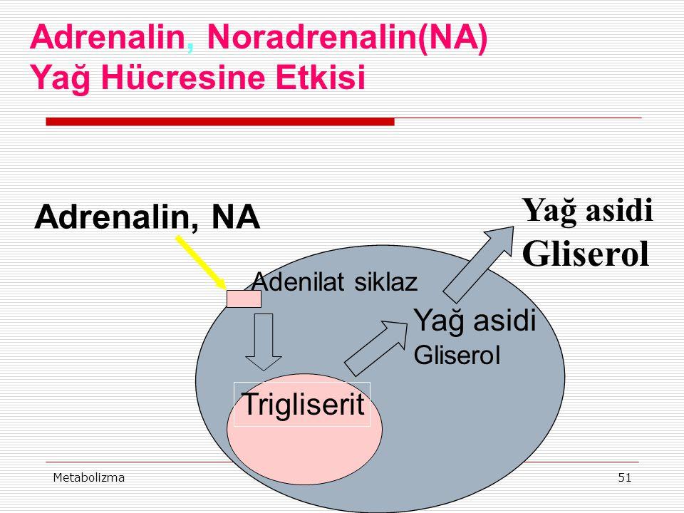 Gliserol Adrenalin, Noradrenalin(NA) Yağ Hücresine Etkisi Yağ asidi