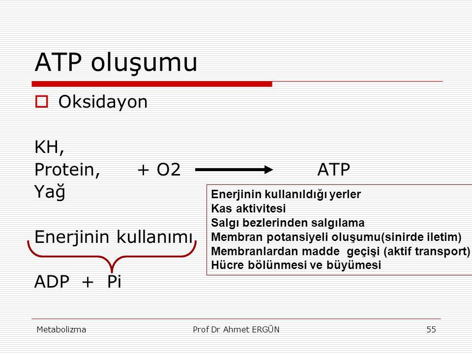 ATP oluşumu Oksidayon KH, Protein, + O2 ATP Yağ Enerjinin kullanımı