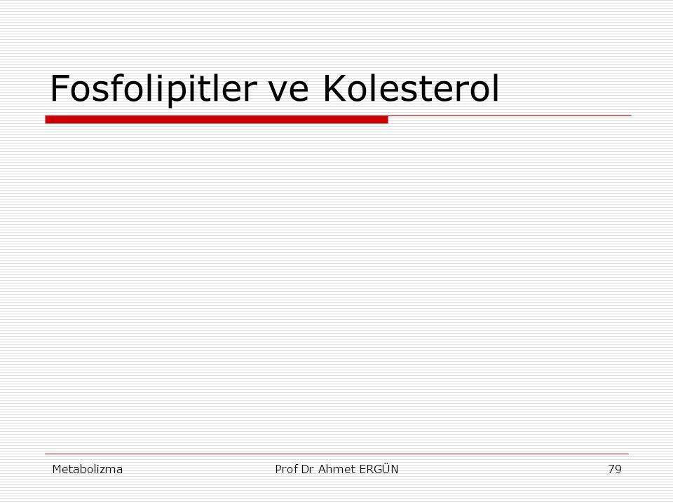 Fosfolipitler ve Kolesterol