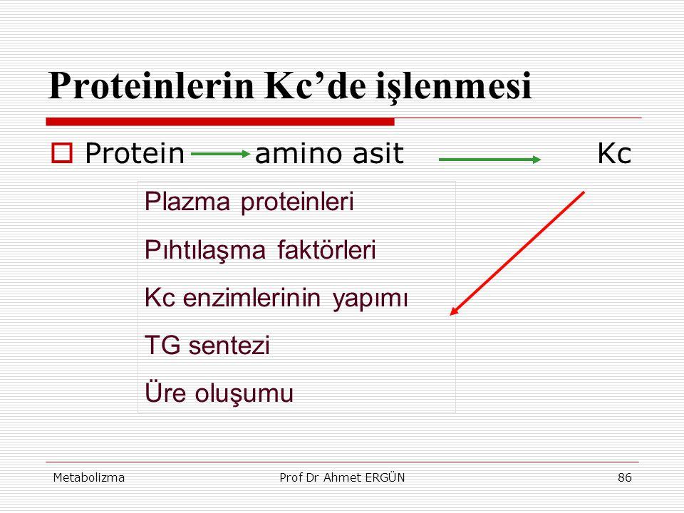 Proteinlerin Kc'de işlenmesi