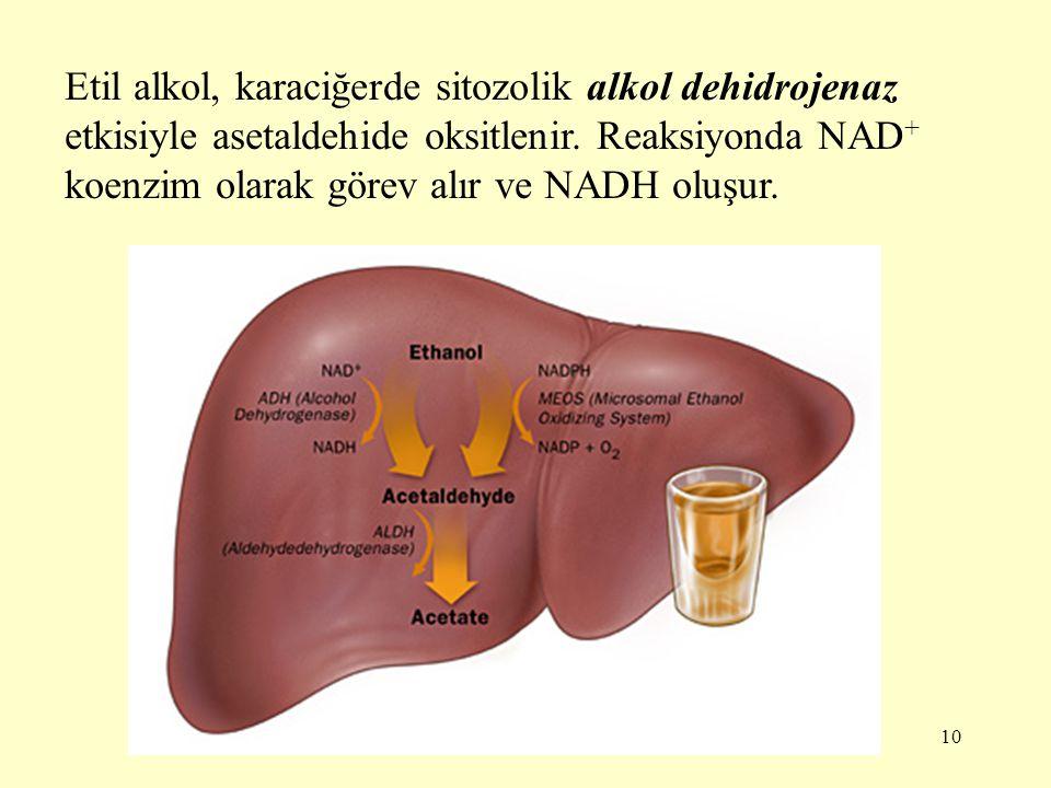 Etil alkol, karaciğerde sitozolik alkol dehidrojenaz etkisiyle asetaldehide oksitlenir.