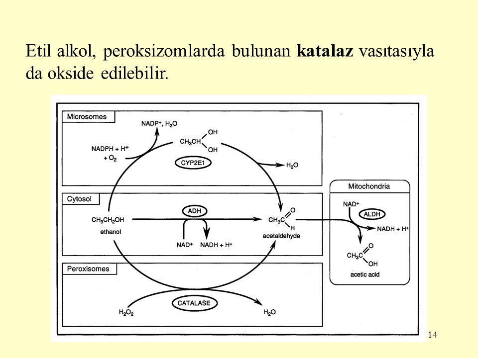 Etil alkol, peroksizomlarda bulunan katalaz vasıtasıyla da okside edilebilir.