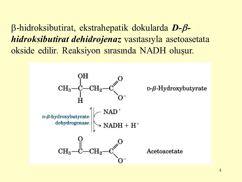 -hidroksibutirat, ekstrahepatik dokularda D--hidroksibutirat dehidrojenaz vasıtasıyla asetoasetata okside edilir.