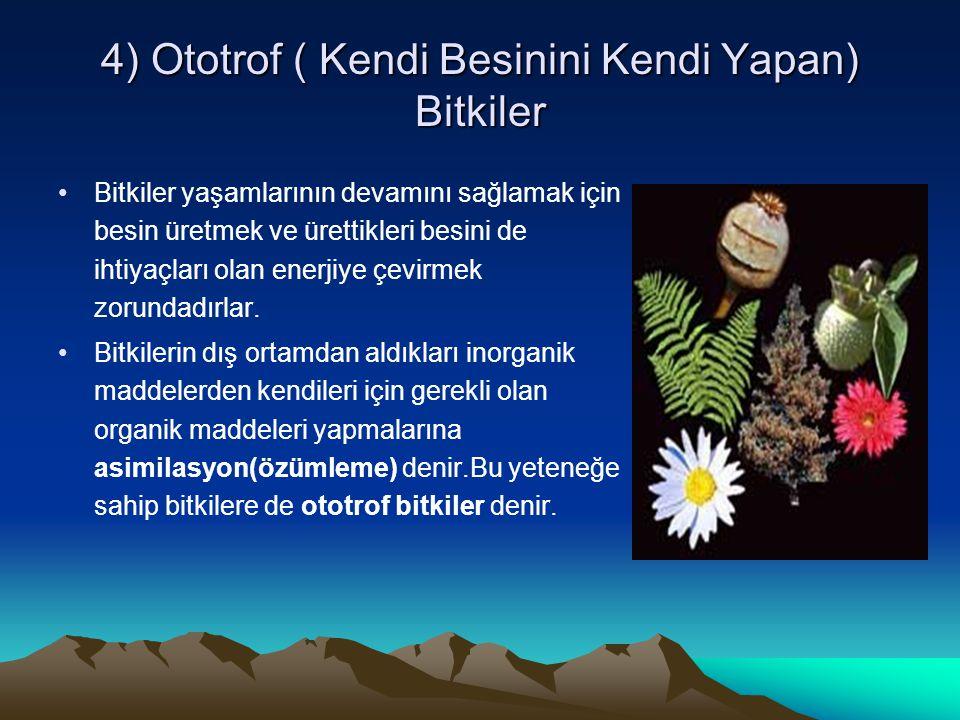 4) Ototrof ( Kendi Besinini Kendi Yapan) Bitkiler